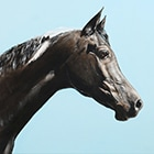 Blue Sky Black Horse